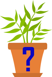 plant_question