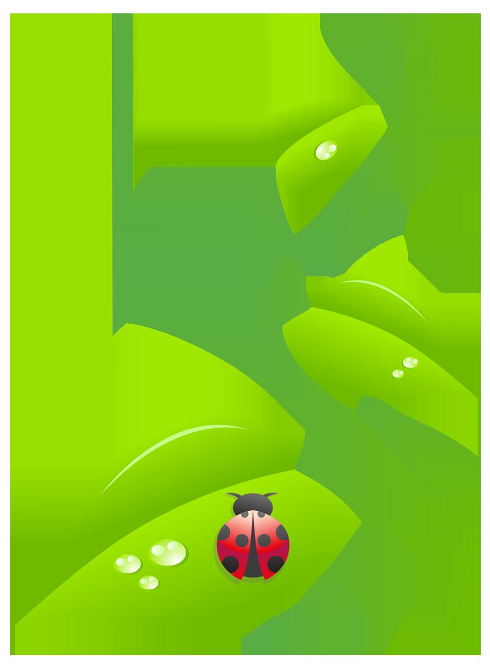 Ladybug_Vine